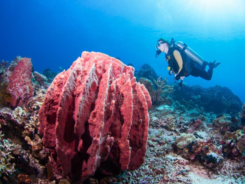 Operatore subacqueo e spugna gigante fotografia stock