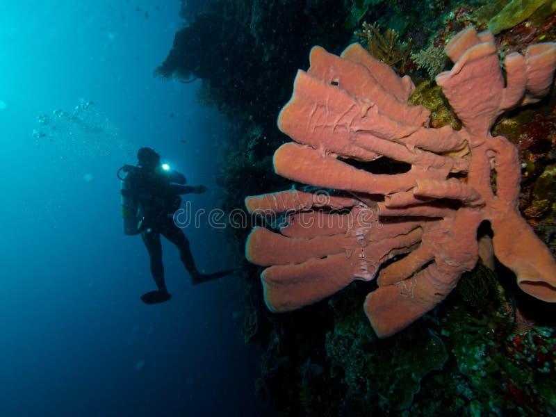 Operatore subacqueo e spugna rosa del tubo immagine stock