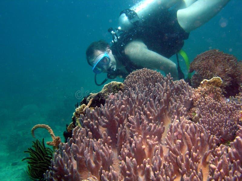 Operatore subacqueo su corallo fotografie stock
