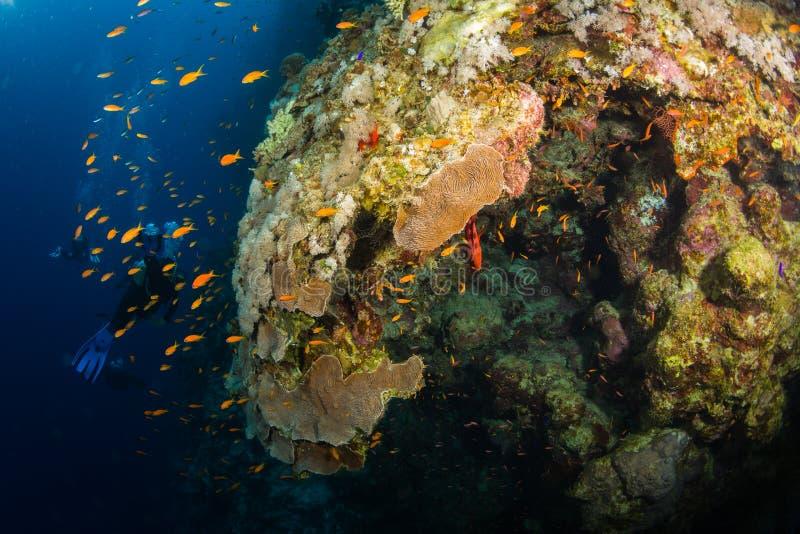 Operatore subacqueo sul reaf immagine stock