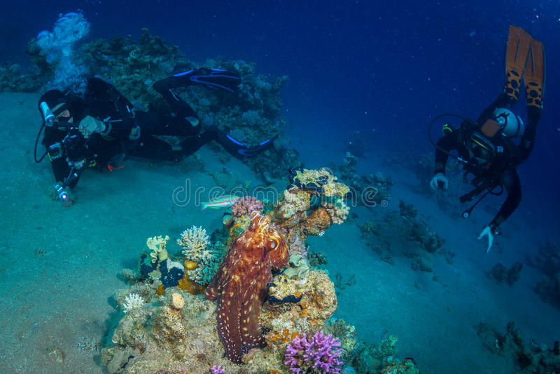 Operatore subacqueo sul reaf fotografie stock