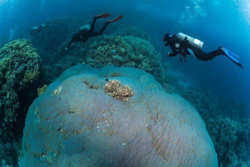 Operatore subacqueo sul reaf fotografie stock libere da diritti