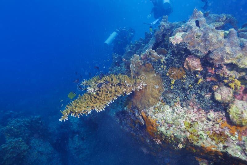 Operatori subacquei e barriera corallina immagine stock