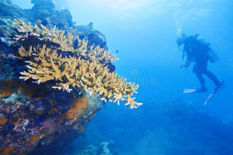 Operatori subacquei e barriera corallina immagini stock