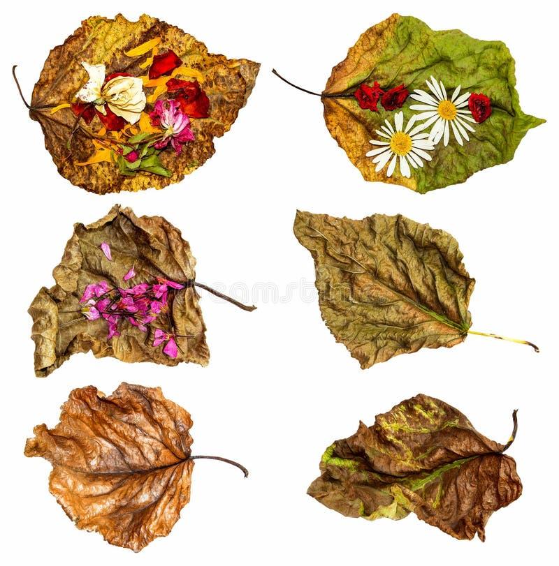 Opgedroogde bladeren van populier met roze en geranium vector illustratie