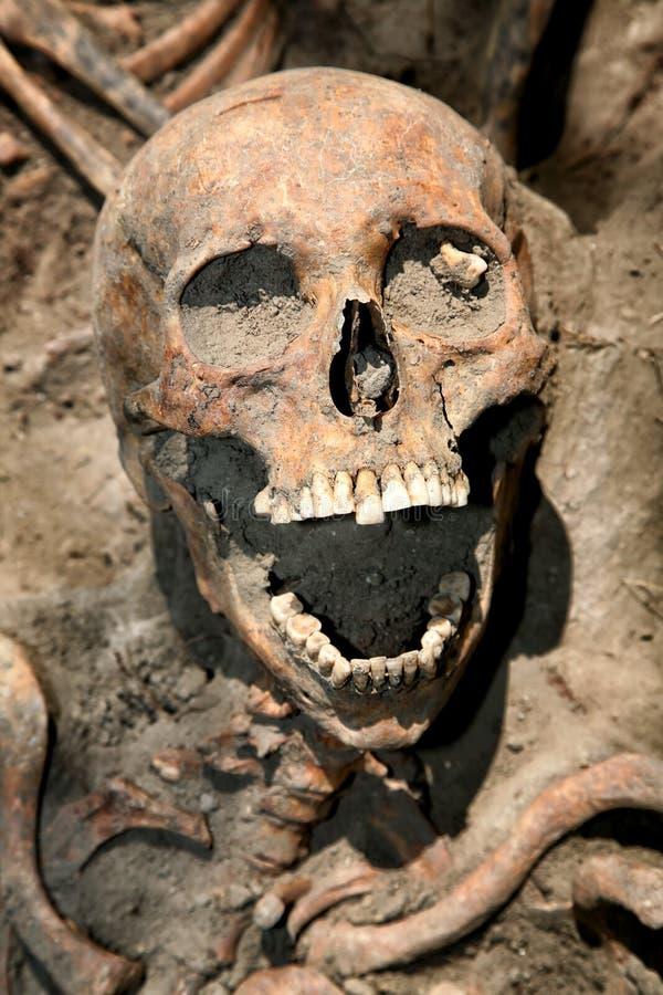 Opgegraven de schedel stock afbeeldingen