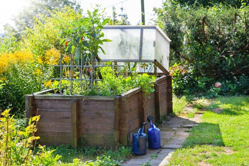 Opgeheven bed in zomer, die in de tuin de in tussenbouw kweken stock foto
