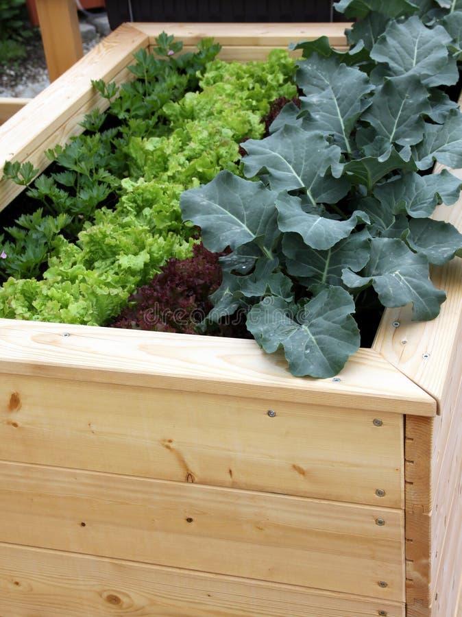 Opgeheven tuinbed voor container het tuinieren stock foto's