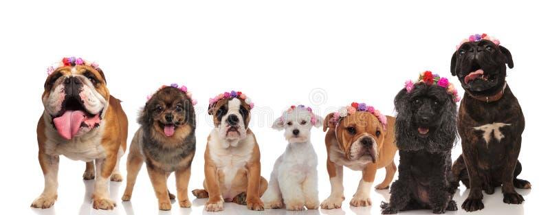 Opgewekte groep hondvrienden die bloemenkronen dragen stock foto's