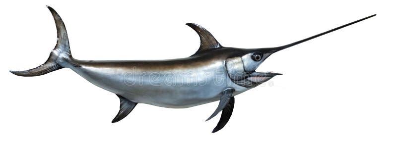 Opgezette Zwaardvissen stock afbeelding
