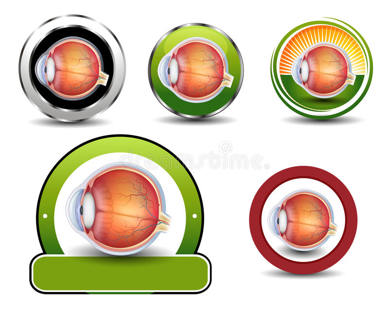 Ophthalmology symbols collection. Human eye cross section vector illustration