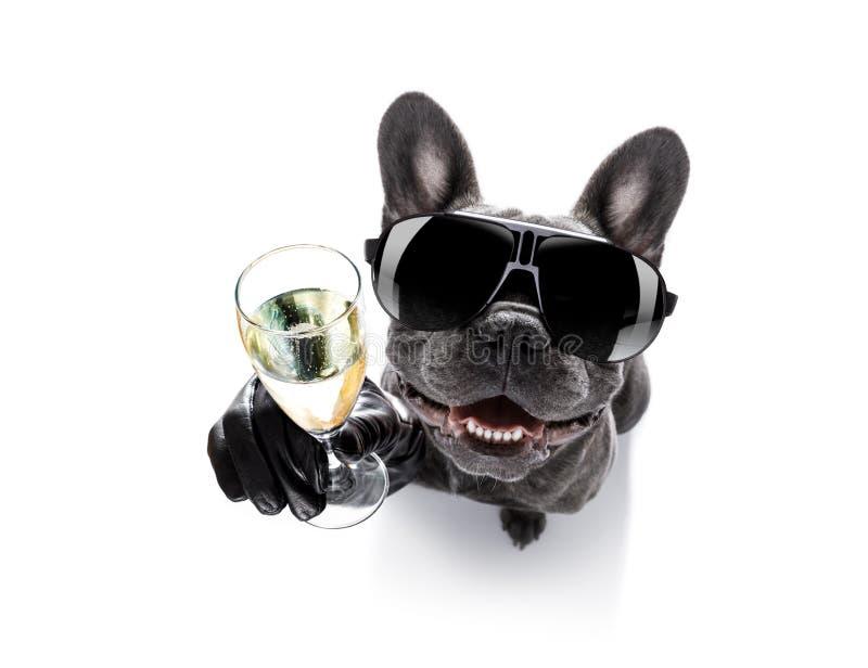 Opiły pies pije koktajl zdjęcia royalty free