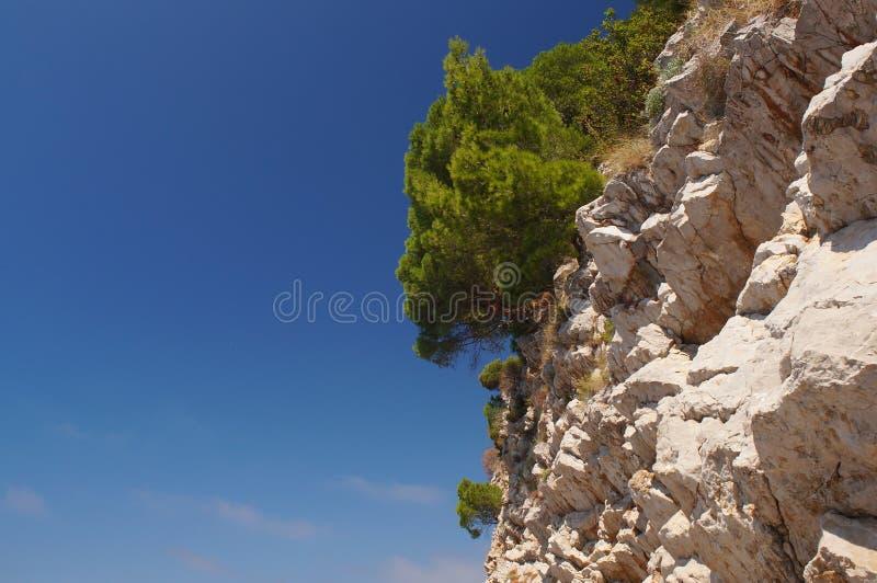 Opiekun horyzont Montenegro z uroczym fragrant sosnowym lasem, zdjęcia stock