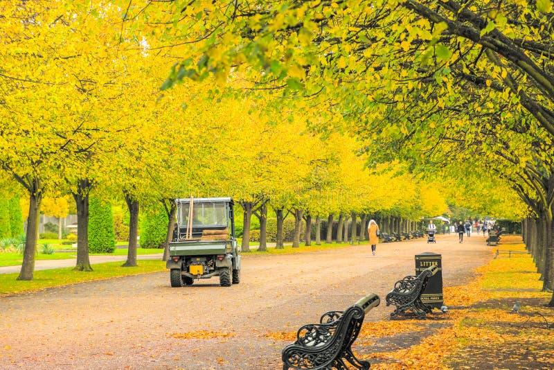 Opiekun parku przejeżdża przez zadrzewioną aleję w Regent's Park w Londynie zdjęcie royalty free