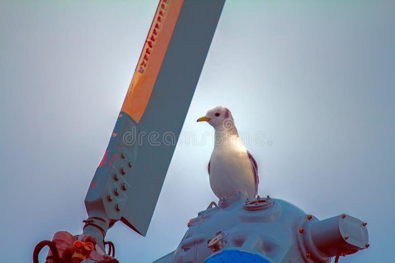 opierający się śmigłowcowy i odpoczywać na śmigłowym Seagull zdjęcia stock