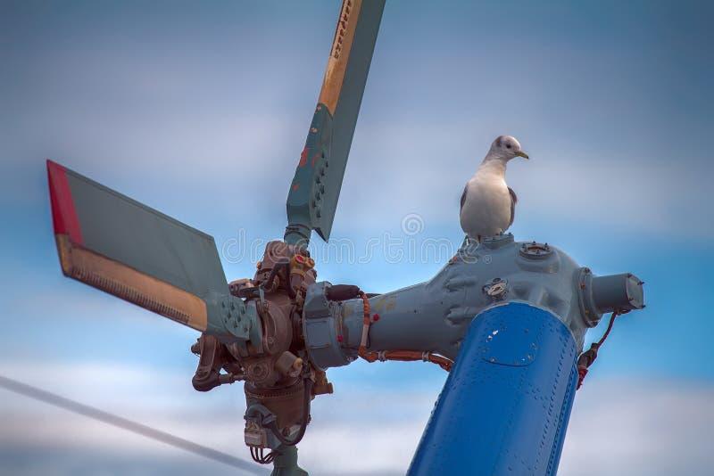 opierający się śmigłowcowy i odpoczywać na śmigłowym Seagull kittiwake obraz royalty free