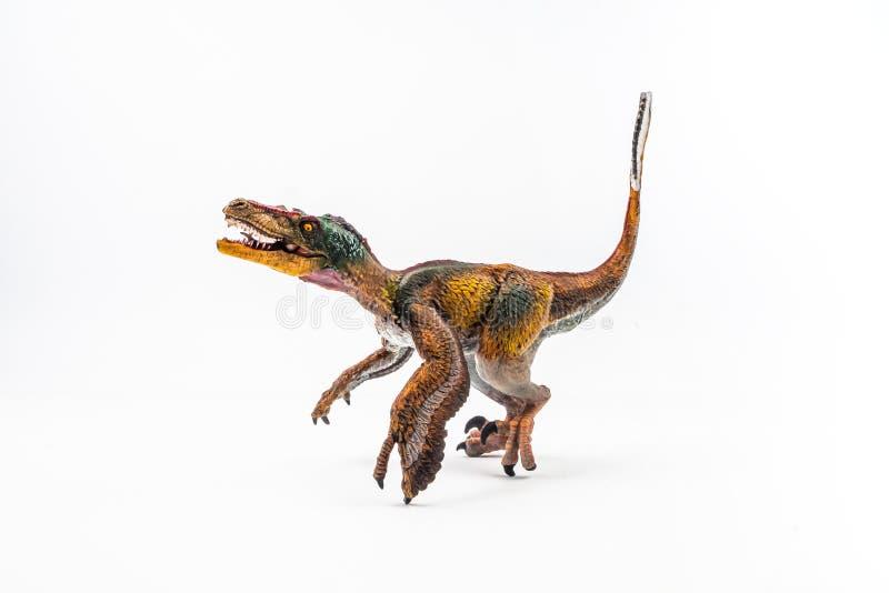 Opierzony Velociraptor, dinosaur na białym tle zdjęcia stock