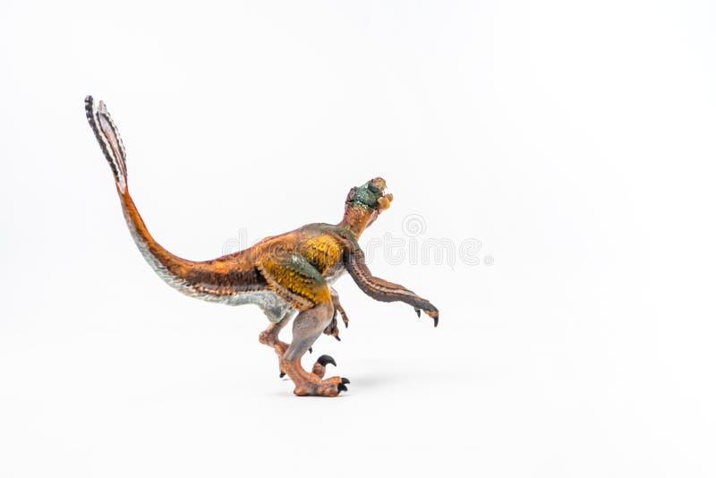 Opierzony Velociraptor, dinosaur na białym tle zdjęcia royalty free