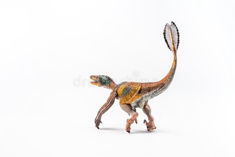 Opierzony Velociraptor, dinosaur na bia?ym tle obraz stock