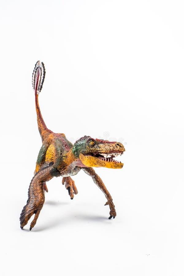 Opierzony Velociraptor, dinosaur na bia?ym tle zdjęcie royalty free