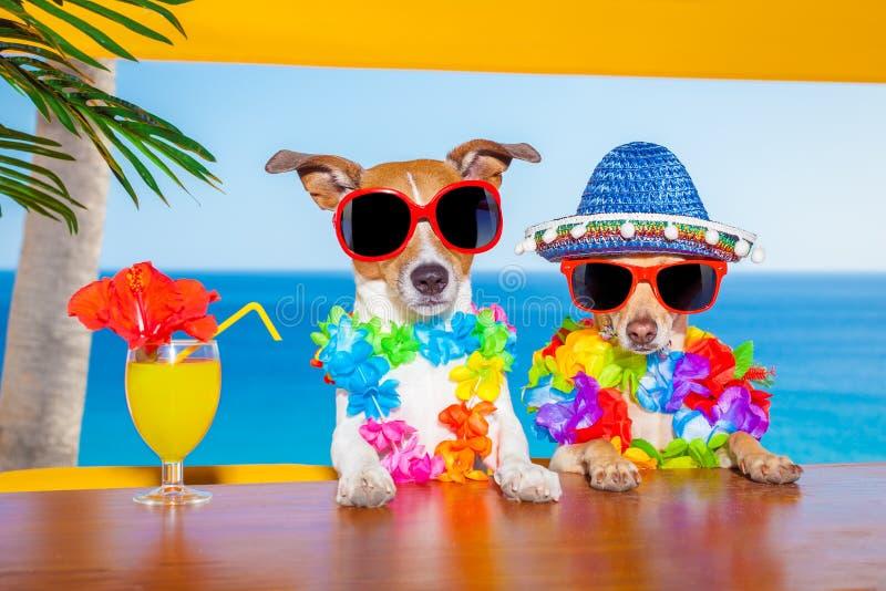 Opili koktajli/lów psy zdjęcie royalty free