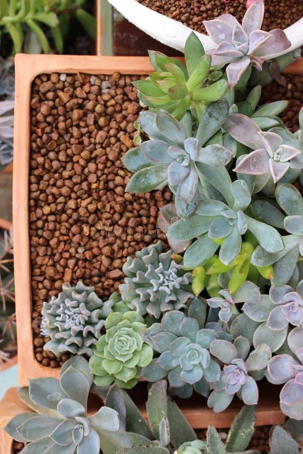 Opinião aérea Clay Pot quadrado de plantas suculentos exóticas imagens de stock