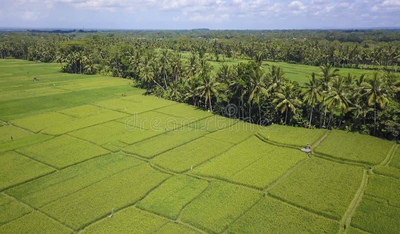 Opinião aérea da paisagem bonita impressionante da exploração agrícola de palmeira do campo e da selva do arroz de Bali com vulcã imagens de stock