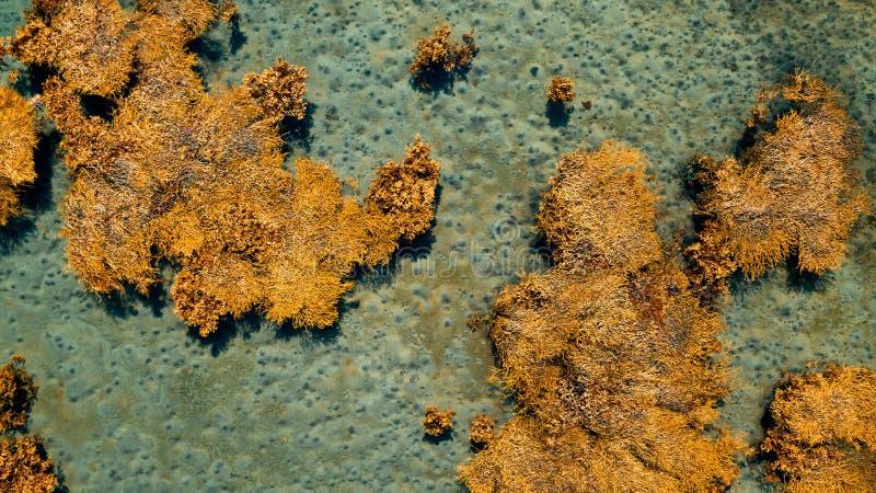 Opinião aérea do zangão da parte superior à lagoa azul com água do mar dos azuis celestes com uma alga foto de stock royalty free