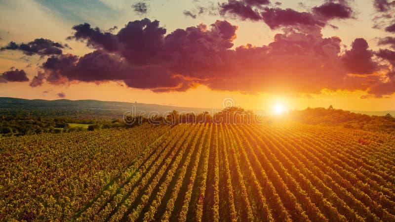 A opinião aérea do zangão dos wineyards coloca da parte superior no por do sol Conceito da opinião aérea do zangão imagem de stock