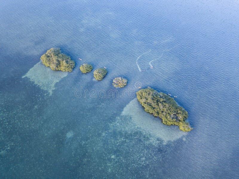 Opinião aérea ilhas e Kayakers dos manguezais foto de stock royalty free