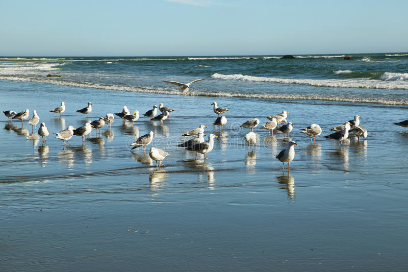 Opinião as gaivotas na segunda praia foto de stock royalty free