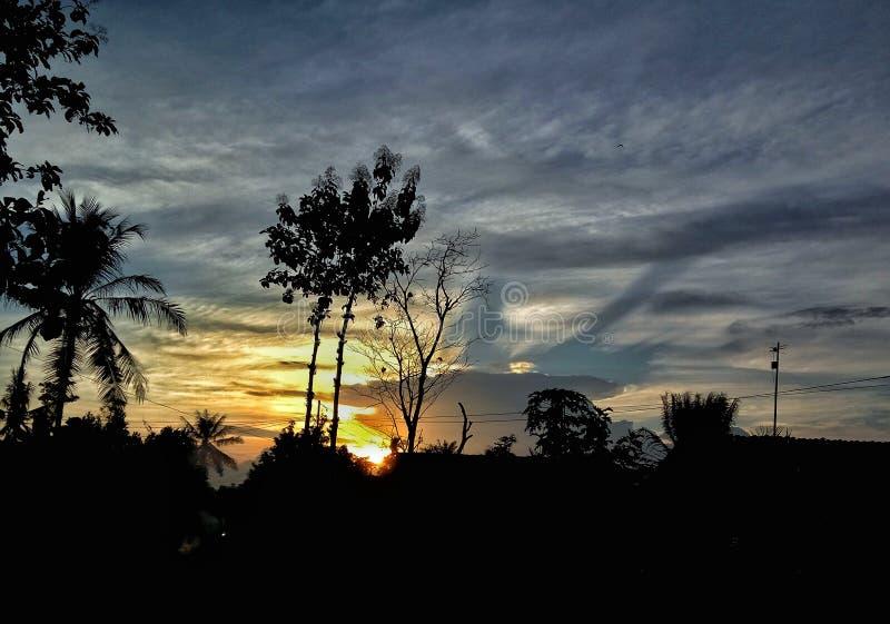Opinião ascendente próxima da natureza da árvore de coco da silhueta no por do sol imagens de stock