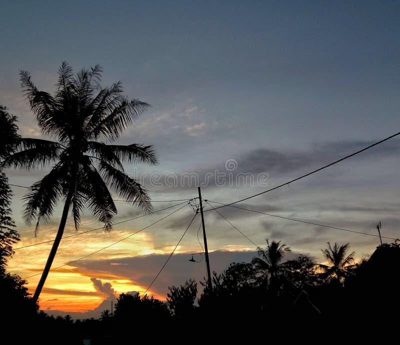 Opinião ascendente próxima da natureza da árvore de coco da silhueta no por do sol foto de stock royalty free