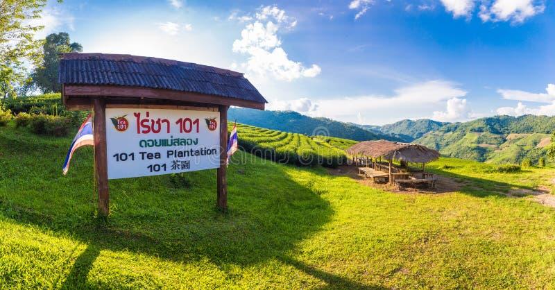 Opinião bonita do panorama da paisagem da plantação de chá 101 no dia brilhante no fundo do céu azul, atração turística em Doi Ma imagem de stock royalty free