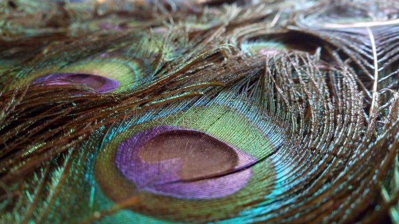 Opinião bonita dos pares de penas do pavão fotografia de stock