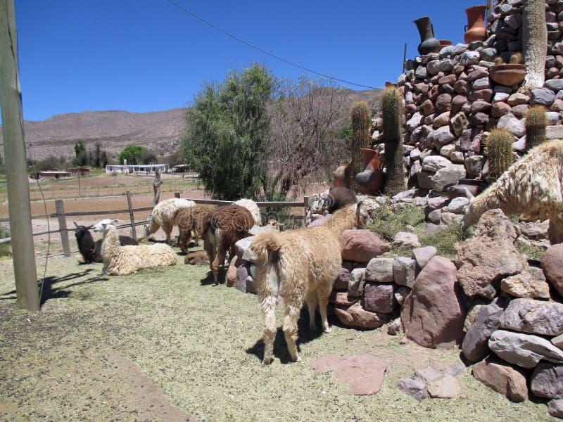 Opinião bonita o Quebrada de Humahuaca Jujuy Argentina Montanhas de cores infinitas fotografia de stock royalty free