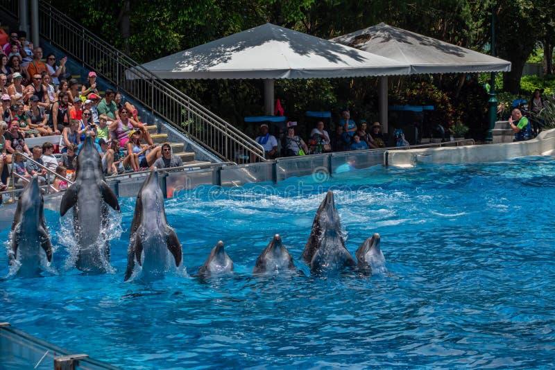 A opinião bonita os golfinhos que saltam em dias do golfinho mostra em Seaworld 3 fotografia de stock