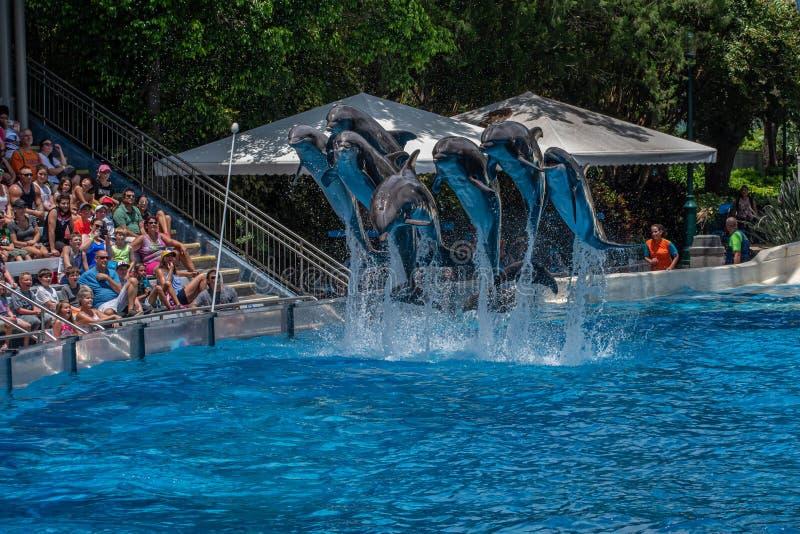 A opinião bonita os golfinhos que saltam em dias do golfinho mostra em Seaworld 1 foto de stock royalty free