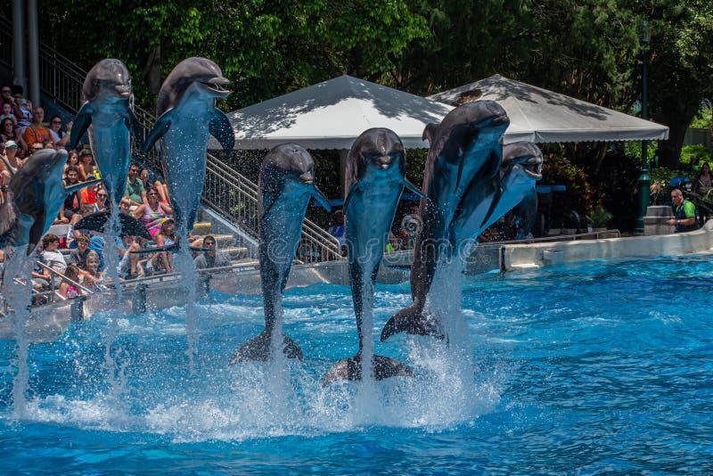 A opinião bonita os golfinhos que saltam em dias do golfinho mostra em Seaworld 4 foto de stock