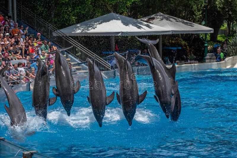 A opinião bonita os golfinhos que saltam em dias do golfinho mostra em Seaworld 5 imagens de stock royalty free