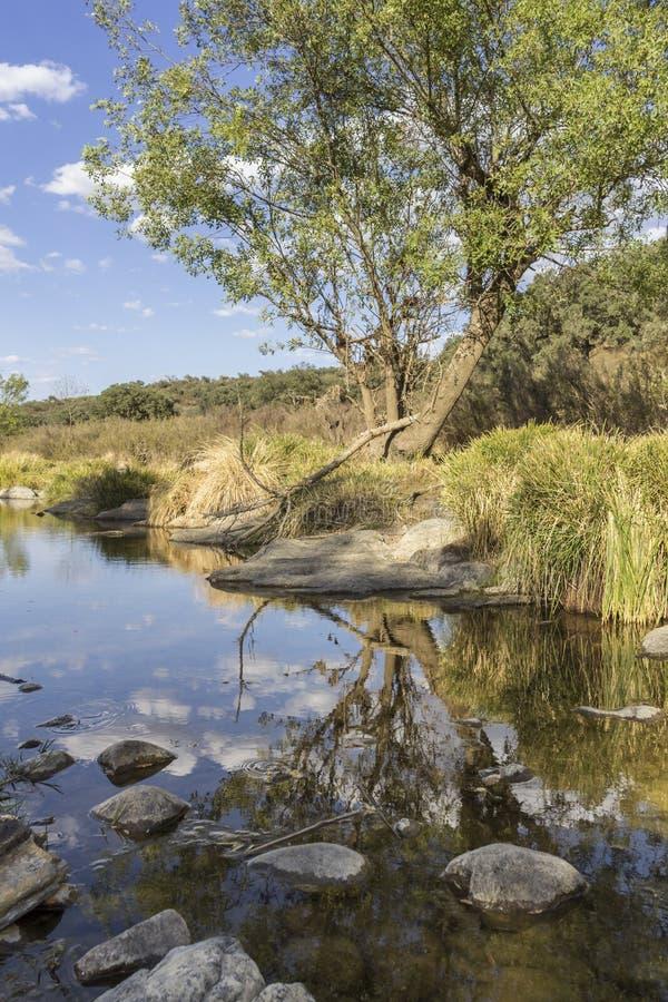 Opinião cênico da paisagem do campo de um córrego da água fresca foto de stock
