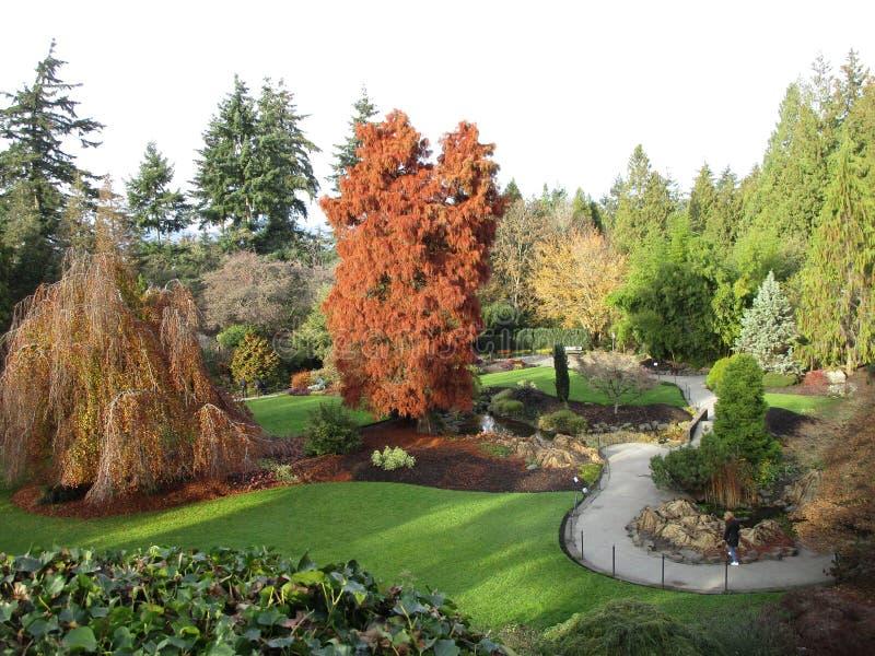 Opinião cênico do outono a rainha Elizabeth Park Garden, 2018 fotos de stock