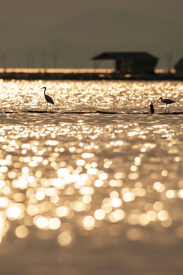 A opinião cênico fantástica do lago, luz do por do sol brilha para baixo no lago tropical, brilho colorido na água, grande posiçã fotografia de stock