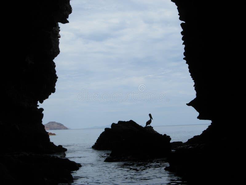 Opinião Cabo San Lucas dos animais selvagens da caverna do oceano imagem de stock