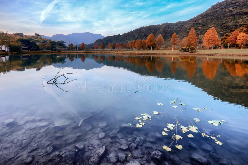 Opinião calma da paisagem de árvores azuis claras do lago e do outono fotografia de stock