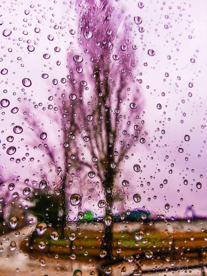A opinião cor-de-rosa da janela na estação do outono com água deixa cair o fundo no vidro imagem de stock royalty free