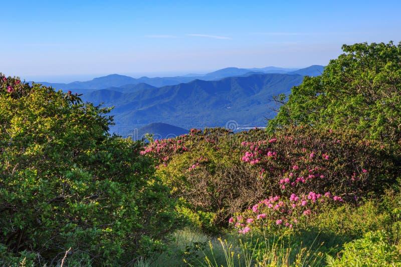 Opinião Craggy dos jardins do azul Ridge Mountains do NC foto de stock