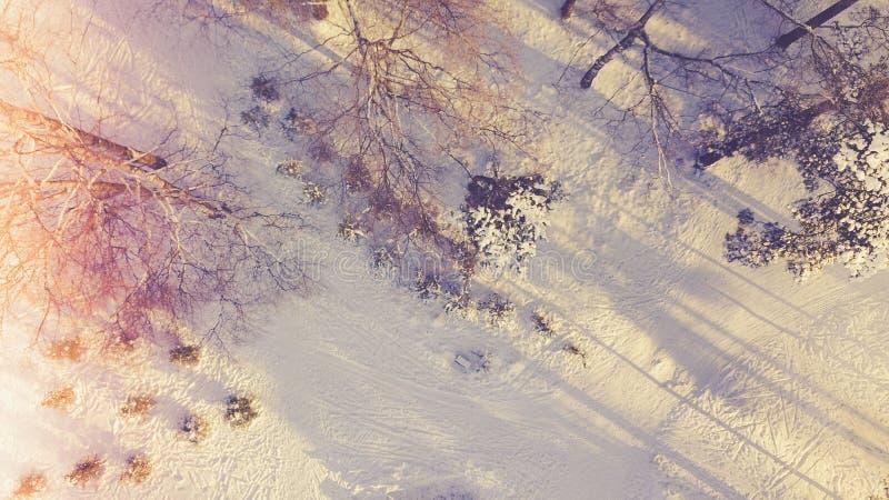 Opinião da antena/zangão da floresta sempre-verde coberto de neve da árvore imagens de stock royalty free