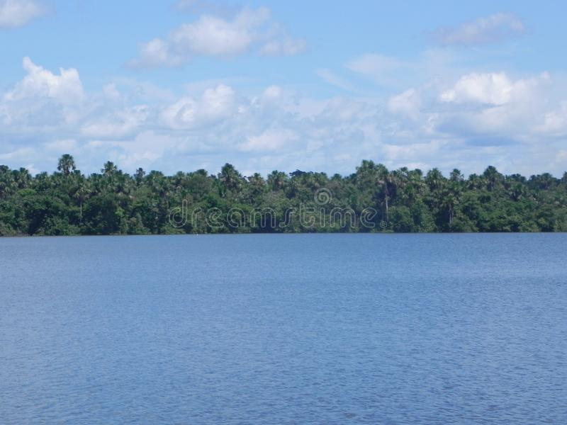 Opinião da floresta de Sunny Amazon imagens de stock royalty free