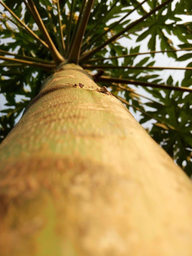 Opinião da formiga da árvore imagens de stock royalty free
